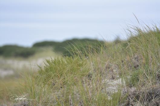 mindingshop.com-dunes