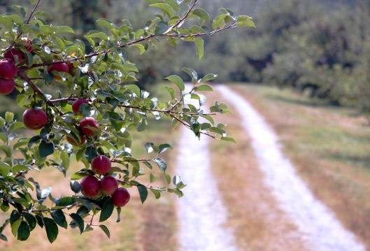 apple 2 LR